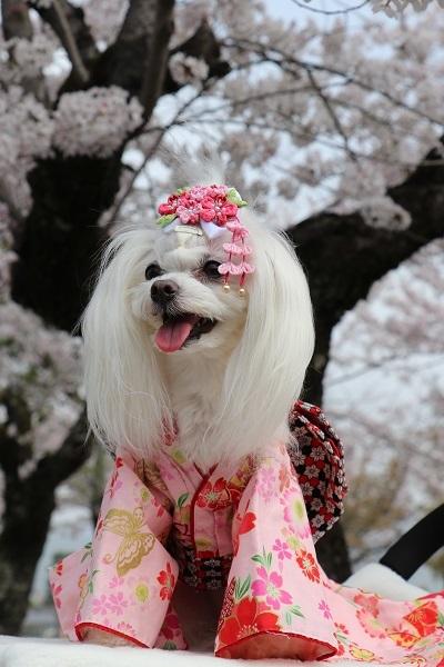 2021.04.10 京都の桜①(嵐山)-13