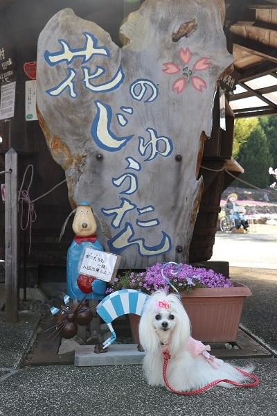 2021.05.10 花のじゅうたん①-1