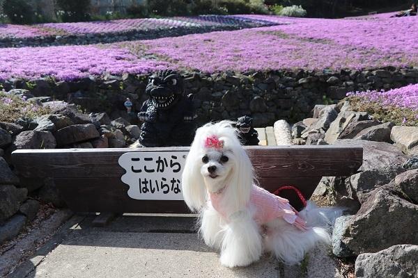 2021.05.11 花のじゅうたん②-6