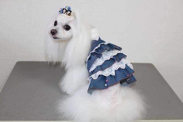 2021.05.19 犬服自習.38(ジャンパースカート③)-5