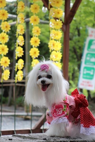 2021.08.06 水無瀬神宮(風車)-5