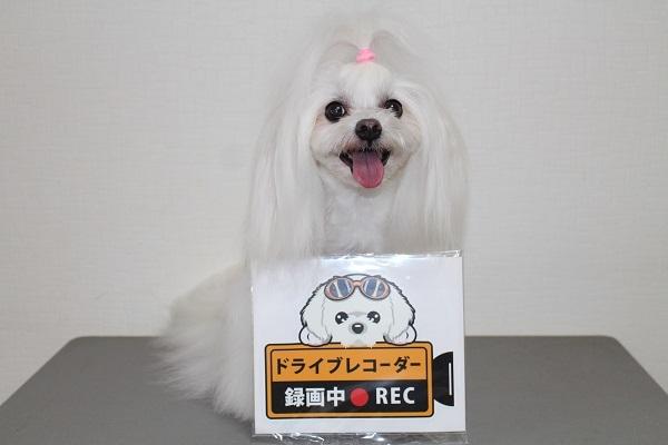 2021.09.28 楽天お買い物マラソン完走!!(2回目)②-1