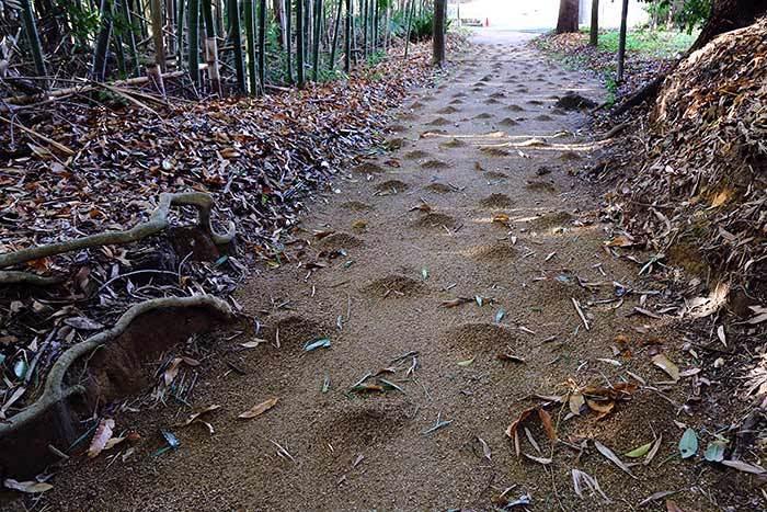 佐紀神社(西畑) 砂モチ4