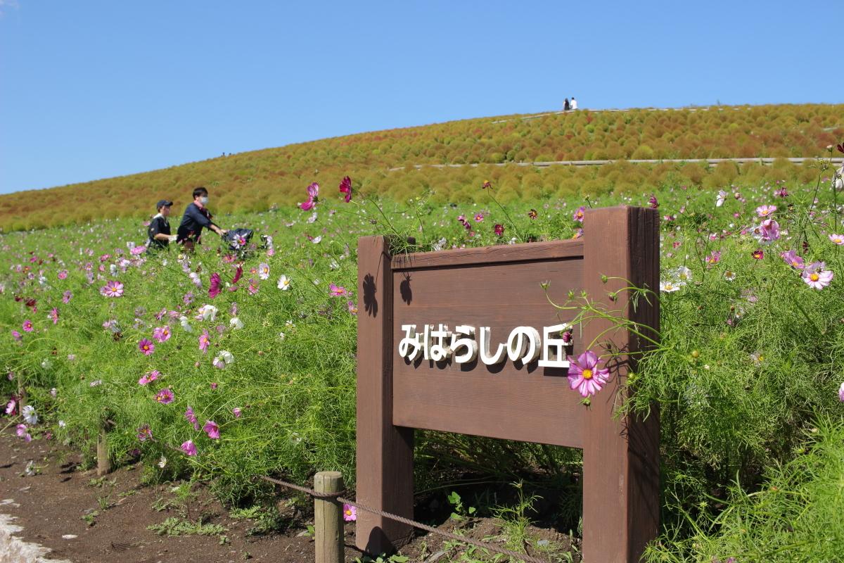 IMG_6720-j.jpg