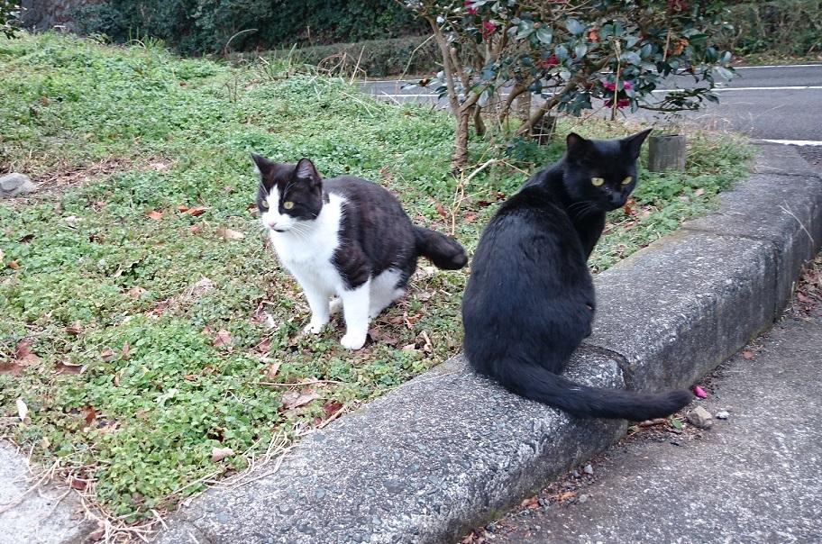 ma生後半年くらいの甘えん坊子猫ちゃん✨❤️✨大好きなママと一緒ニャン(=^ェ^=)