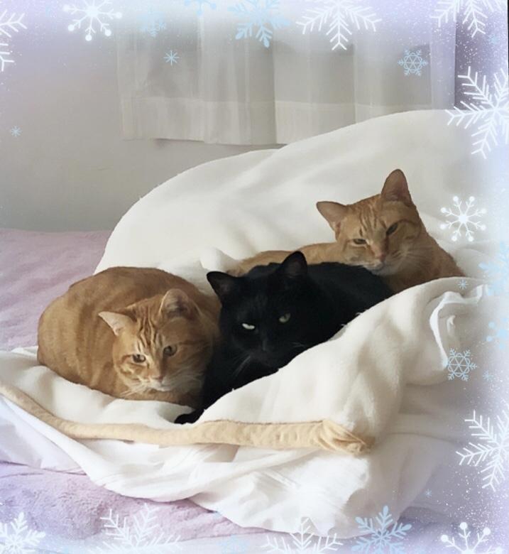 茶太郎も猫団子に仲間入りです❤️