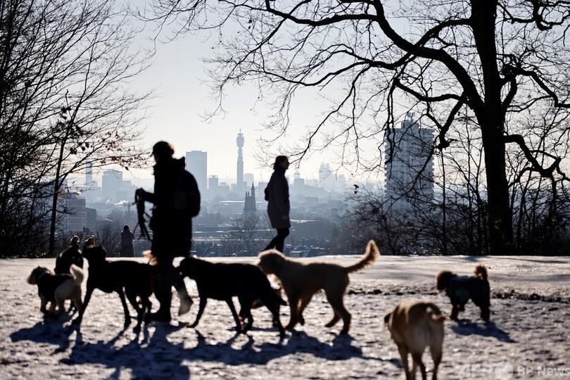 ロンドンで犬ちゃんをお散歩させている人達