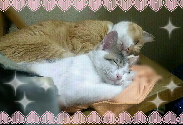 ピータお兄ちゃん㊤の添い寝で安心して眠るモルちゃん㊦