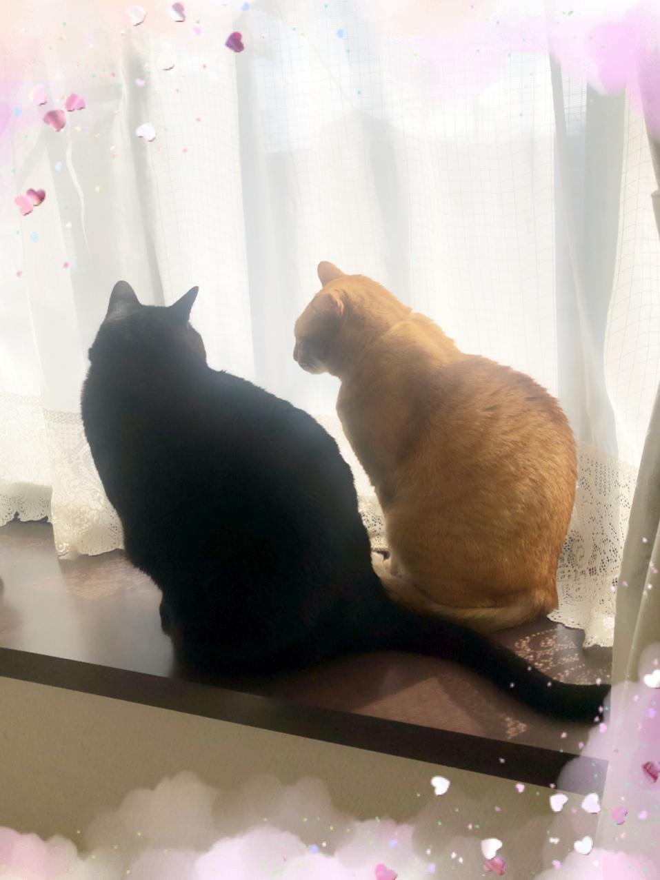 出窓で仲良く日向ぼっこ☀️