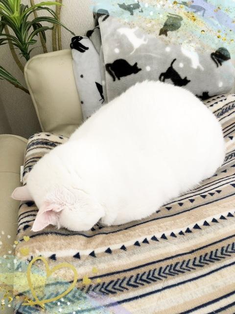 夢のすけは「ごめん寝」ポーズでお昼寝します💤