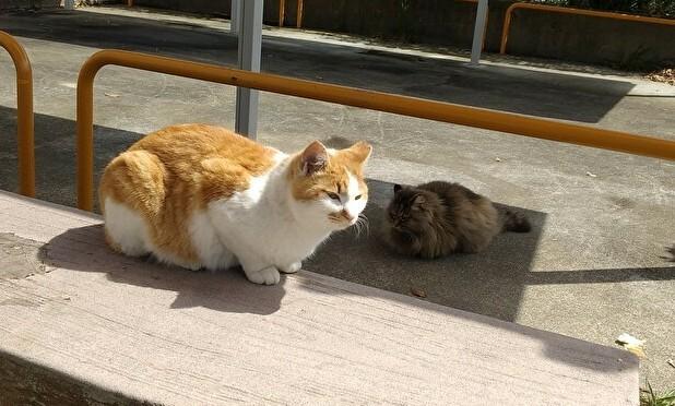 アグネス家のフード宅配食堂でご飯の順番を待つ猫ちゃん