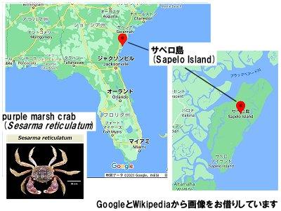 サペロ島と小っちゃなカニ