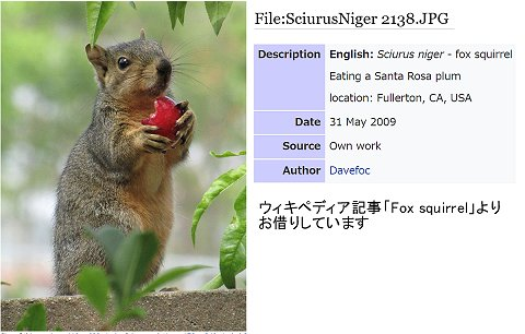 Fox squirrelウィキペディア記事より