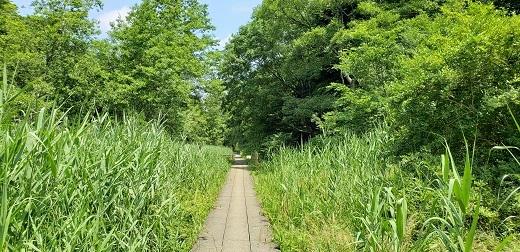市川自然公園
