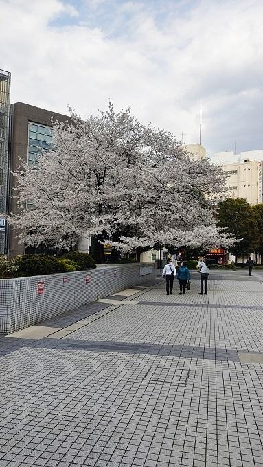ソニックの桜大宮公園の桜20210326
