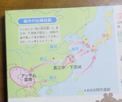 「大迫力!写真と絵でわかる日本史」日本稲のルーツ
