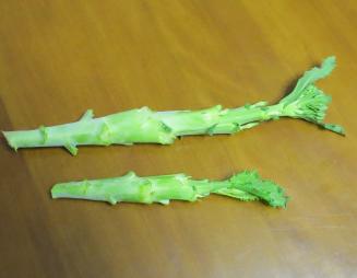 カイラン収穫物