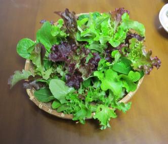 ビニールハウスのミックスレタス収穫物