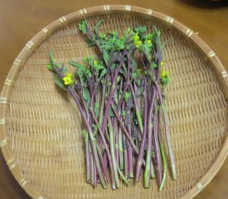 コウタイサイ収穫物