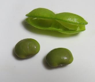 エダマメ茹で豆の中身