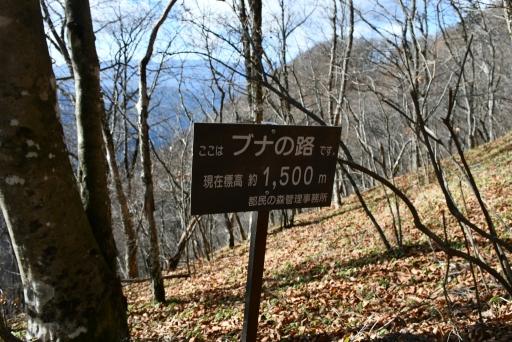 20201204・三頭山4-19・中