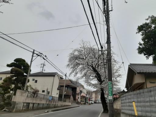 20210325・桜の空4・中