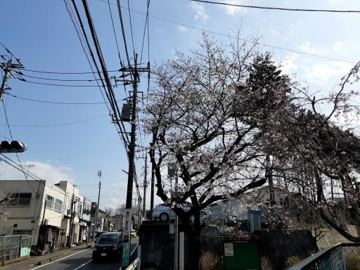 20210323・桜の空1・中