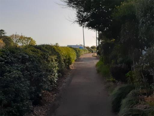 20210329・坂之下散歩09