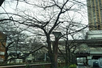ブログ梅の花中目桜
