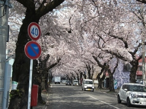 210420桜のトンネル