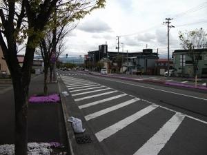 210511芝桜の道