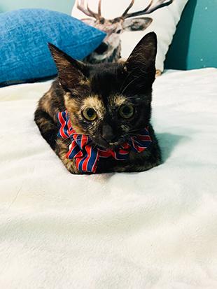 猫サビちゃん