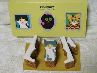 catout1.jpg