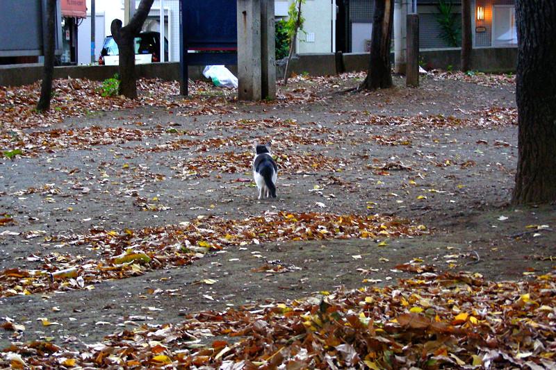 落ち葉の境内と猫1