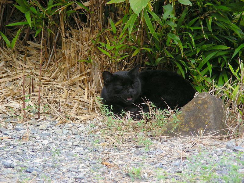 笹と黒猫1