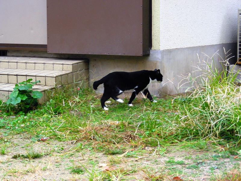 公民館前の黒白猫2