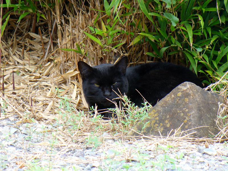 笹と黒猫2