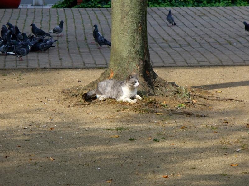 公園の樹とグレー白猫2