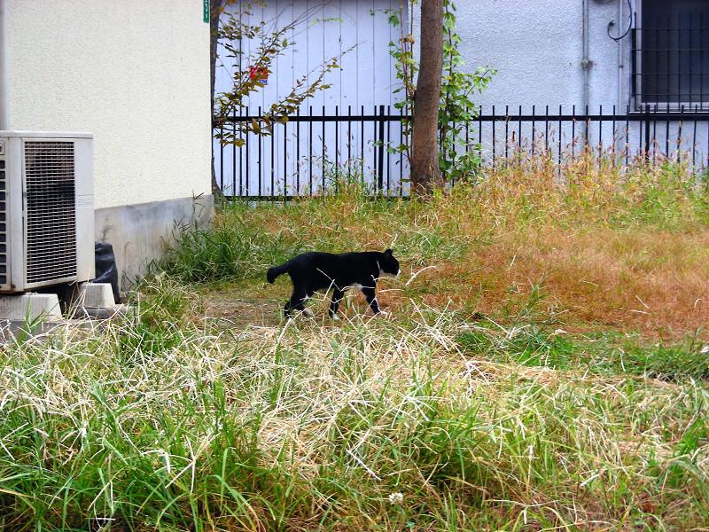 公民館前の黒白猫3