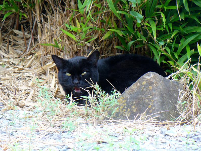 笹と黒猫3