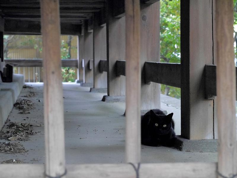 縁の下の犬走りにいた黒猫1