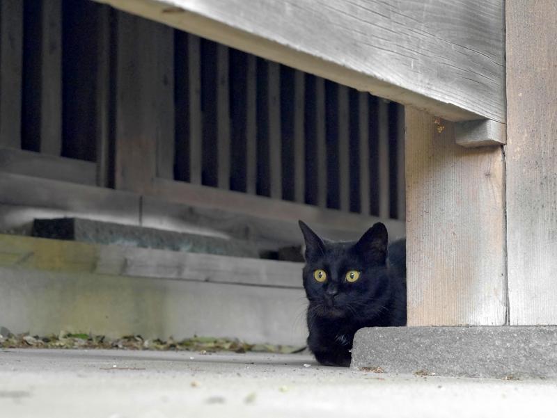 縁の下の犬走りにいた黒猫2