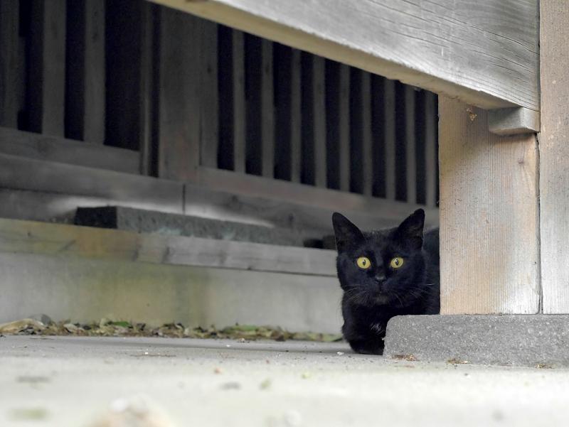 縁の下の犬走りにいた黒猫4