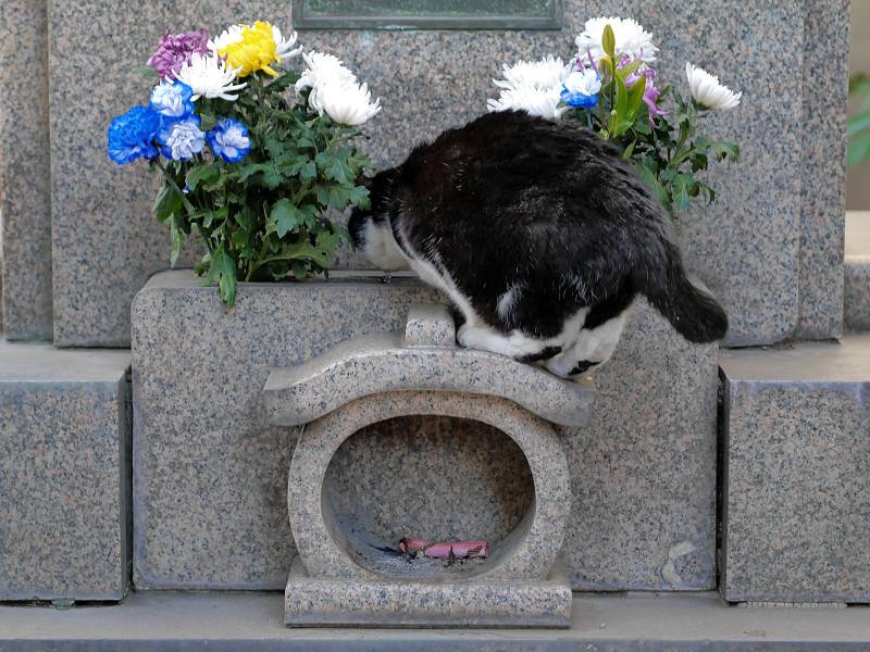 石碑に乗ってる黒白猫1