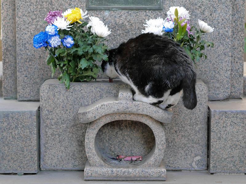 石碑に乗ってる黒白猫2