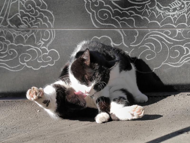 ベロを出しての毛繕いの黒白猫3