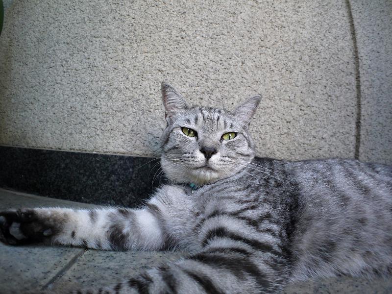 お堂の隣で横になってるサバトラ猫3
