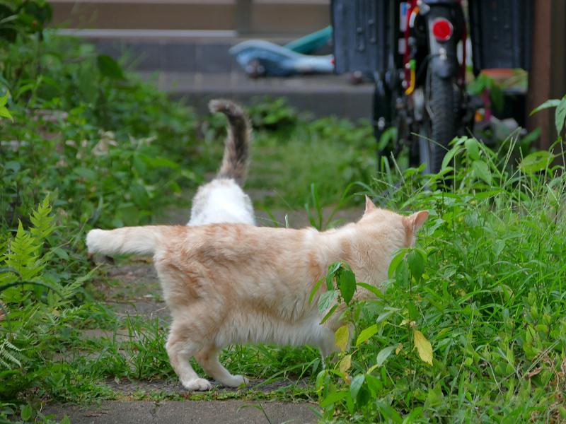 側面を見せてる茶白猫1