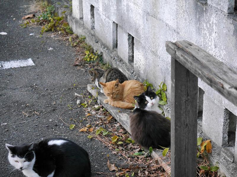 細い板に乗ってる仔猫たち1