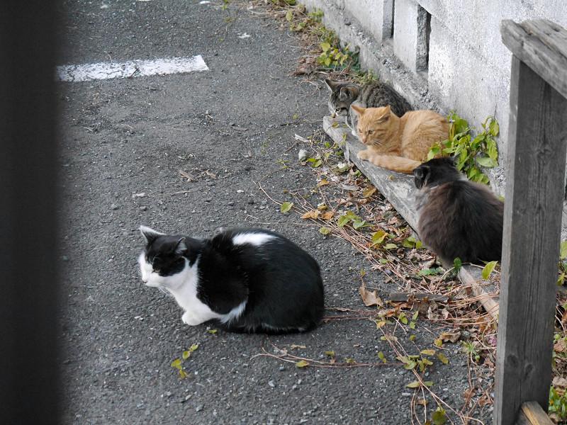 細い板に乗ってる仔猫たち2